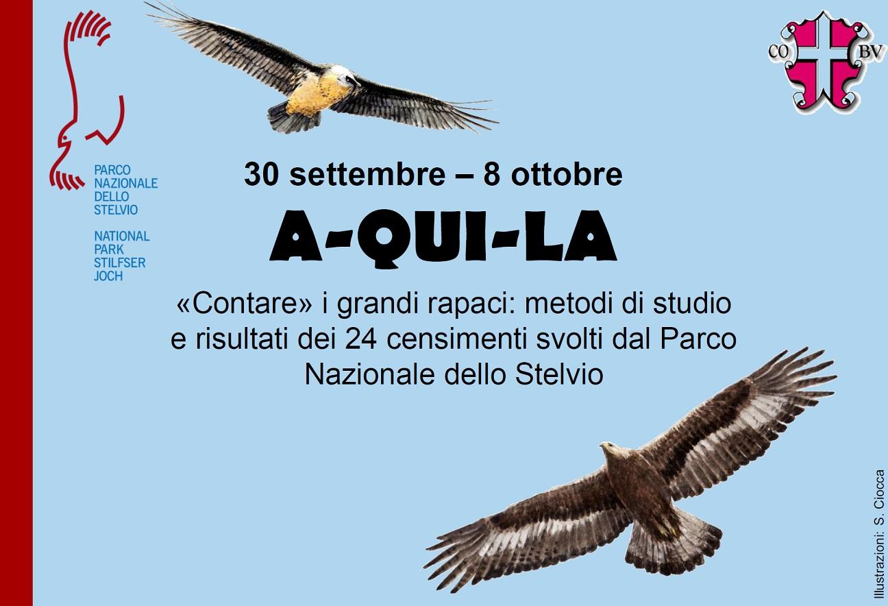 La scienza per il pubblico - Censimento contemporaneo Aquila reale - Gipeto  - Parco Nazionale dello Stelvio 9695e0ab0521