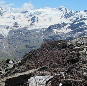 I Passi di Zebrù, difesi un tempo da chilometri di filo spinato, si affacciano sul maestoso Ghiacciaio dei Forni